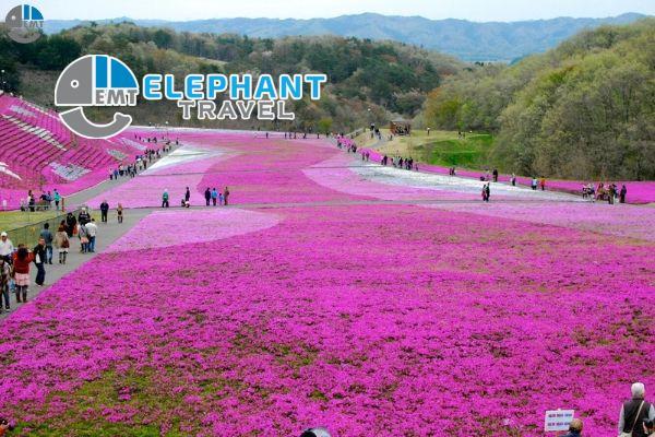 Du lịch Nhật Bản mùa nào đẹp trong 4 mùa Xuân – Hạ – Thu – Đông.