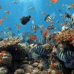 san hô ở đảo cù lao chàm