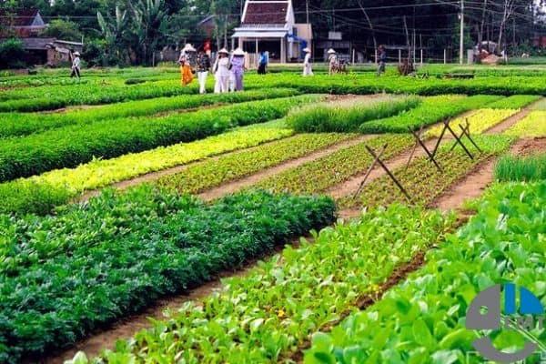Bảng giá vé tham quan Đà Nẵng mới nhất 2019