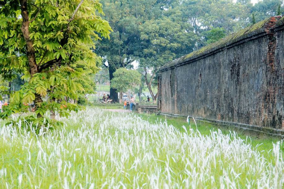 Du khách hào hứng check in hoa cỏ tranh bên Tử Cấm Thành – Đại Nội Huế